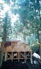 どんぐり小屋のデッキには杉の木が貫通している。おとぎ話の小人の家のような佇まいをみせる