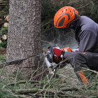 なぜいま国産木材が大きく注目されるのか?利用するメリットや新技術も解説