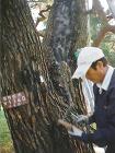 樹木の治療・害虫駆除・ハチの巣駆除 | ... 樹木の治療の様子