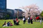 東京ミッドタウン | 複合開発 | Pr... projects/p4iusj0000000ifo-img/pj0003_09.jpg