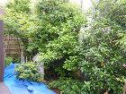 剪定施工例  造園・庭造り、植木の剪定は... 和風庭園剪定前