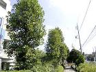 民間事業の施工事例   藤沢造園株式会社 街路樹