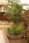緑がたくさんの 広島市安佐南区  | 広...