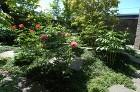 【実例:雑木】神奈川県横浜市O邸の庭 |... /wp-content/uploads/2013/07/DSC_0037-294x195.jpg