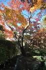 【実例:和風】東京都杉並区Y邸の庭 | ... /wp-content/uploads/2013/12/DSC_0005-398x600.jpg