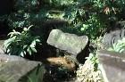 【実例:和風】東京都杉並区Y邸の庭 | ... /wp-content/uploads/2013/12/DSC_0030-294x195.jpg