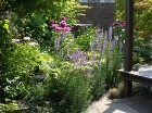 【実例:雑木】神奈川県横浜市O邸の庭 |... /wp-content/uploads/2013/07/P5080389-294x220.jpg