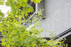 WORKS 大和郡山の家:奈良の一級建築... works/img/works08/img_09.jpg