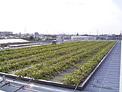 屋根緑化施工例|日本地工 工場 折板屋根緑化