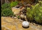 風雅伝 Fu-Garden; 意匠 - ... http://fugarden.com/images/Hobbit/Resize/IMGP5627.JPG