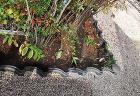 「熱帯魚飾りの玄関床の間」と「冬を彩る和... tikusei/27_asimoto3.JPG