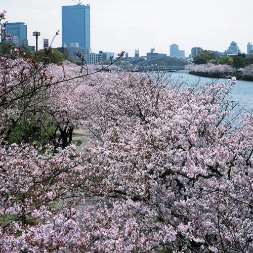 桜の会・平成の通り抜け, 大阪府大阪市, 2004-