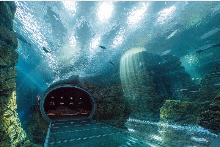 上越市立水族博物館 うみがたり