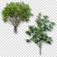 Vol.1 切り抜き樹木 | 建築パース素材無料ダウンロード | 建築...