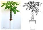 観葉植物[パキラ] | CAD-DATA.com