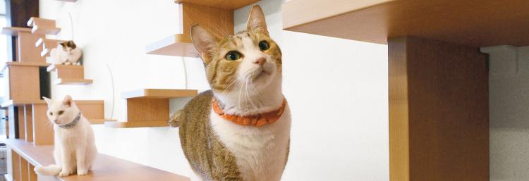 愛猫がリラックスできる部屋! おしゃれで多彩な猫用家具が運動不足を解消...