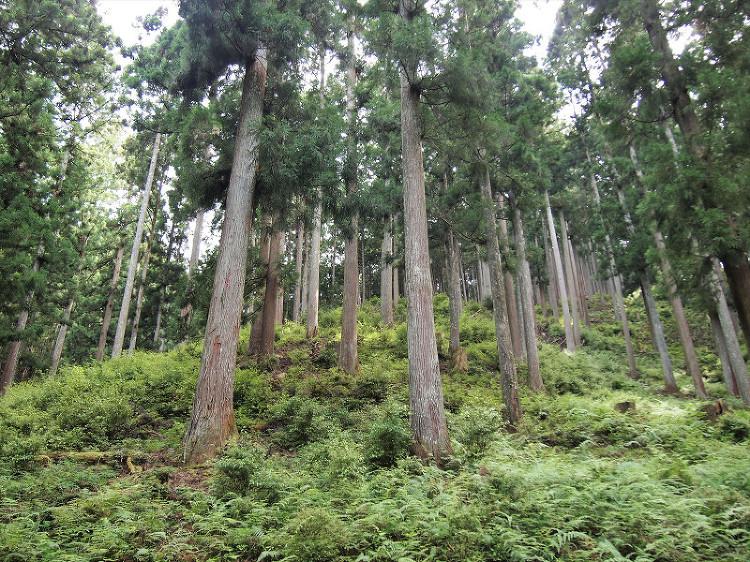 25)森の恵み=木と和紙 - 木の家(木造)・自然素材・無垢材の注文住...