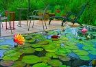 睡蓮が咲くリビングテラス